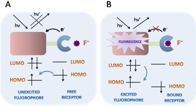 Fluorescent Sensing Of Fluoride In Cellular System