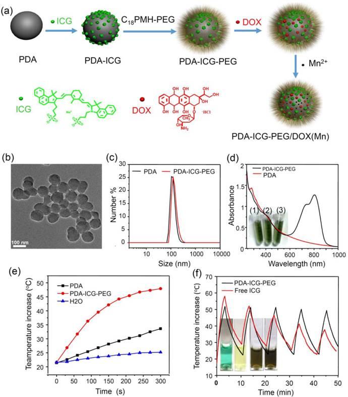 Polydopamine Nanoparticles As A Versatile Molecular