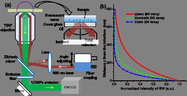 2 photon vs confocal microscopy