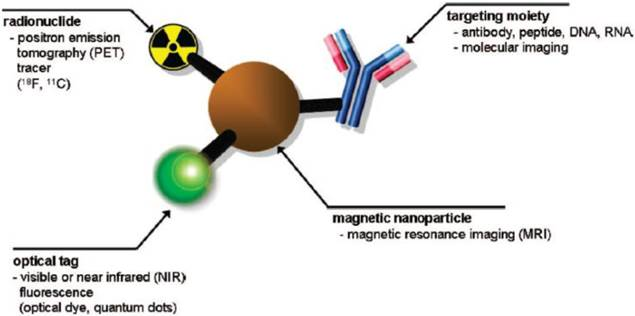 Multifunctional Iron Oxide Nanoparticles For Diagnostics