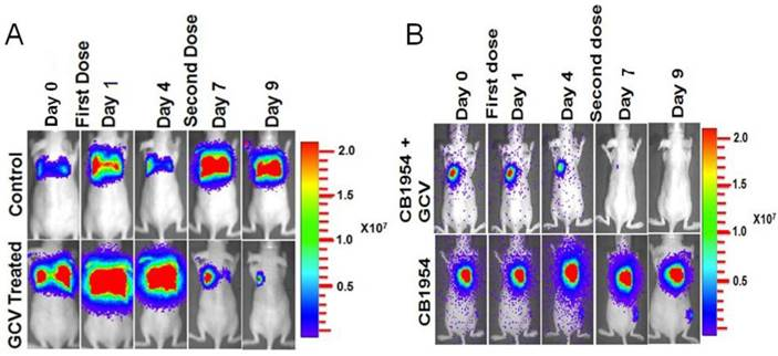 Noninvasive Theranostic Imaging Of Hsv1 Sr39tk Ntr Gcv