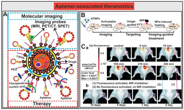 Nucleic Acid Aptamer Guided Cancer Therapeutics And