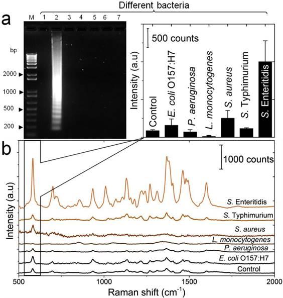 loop mediated isothermal amplification pdf