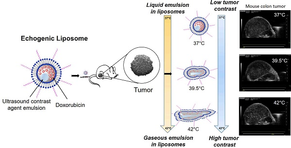 liposome research papers Journal of liposome research in this paper, a review on the advances achieved with liposome-based anti-leishmaniasis drug delivery systems is presented.