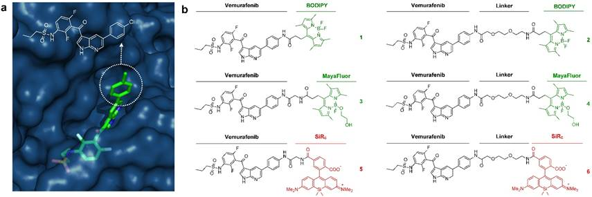 Design and Development of Fluorescent Vemurafenib Analogs