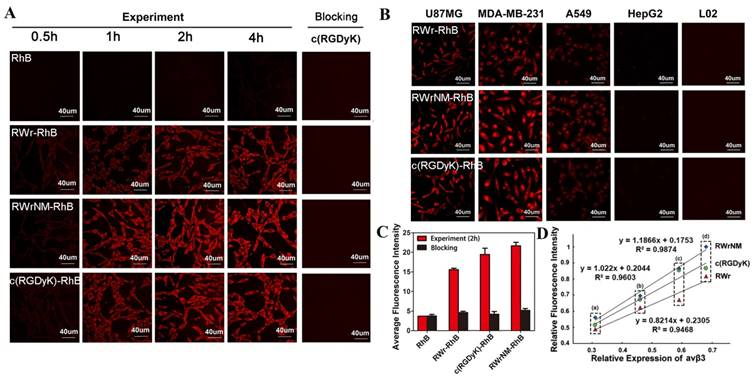 Novel Linear Peptides with High Affinity to αvβ3 Integrin for