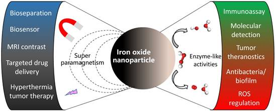 Iron Oxide Nanozyme: A Multifunctional Enzyme Mimetic for