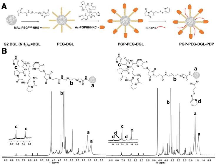 (A) Flow cytometry assay of NP endocytosis by neutrophils