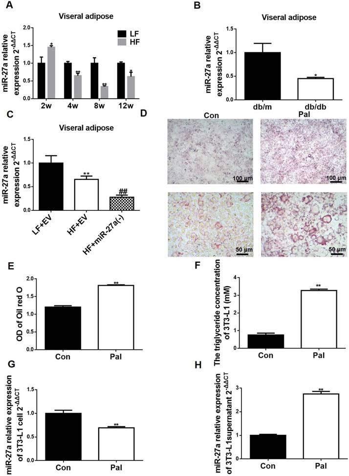 0dd0c2998 Adipocyte-Derived Exosomal MiR-27a Induces Insulin Resistance in ...