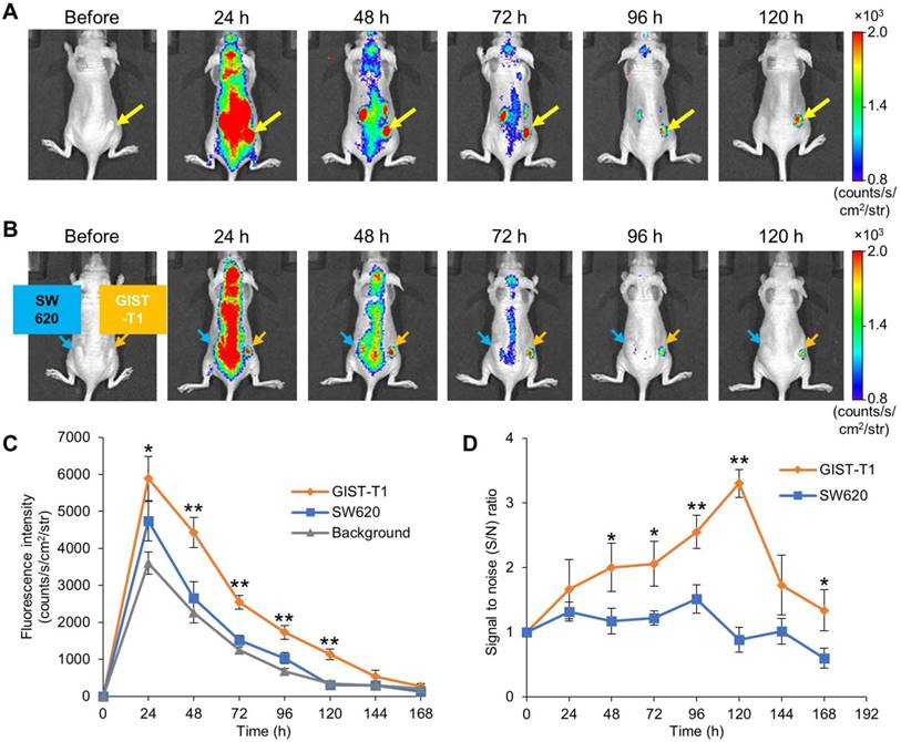 In vivo fluorescence imaging of tumor by PTB. (a