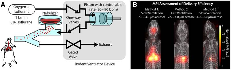 In vivo tracking and quantification of inhaled aerosol using
