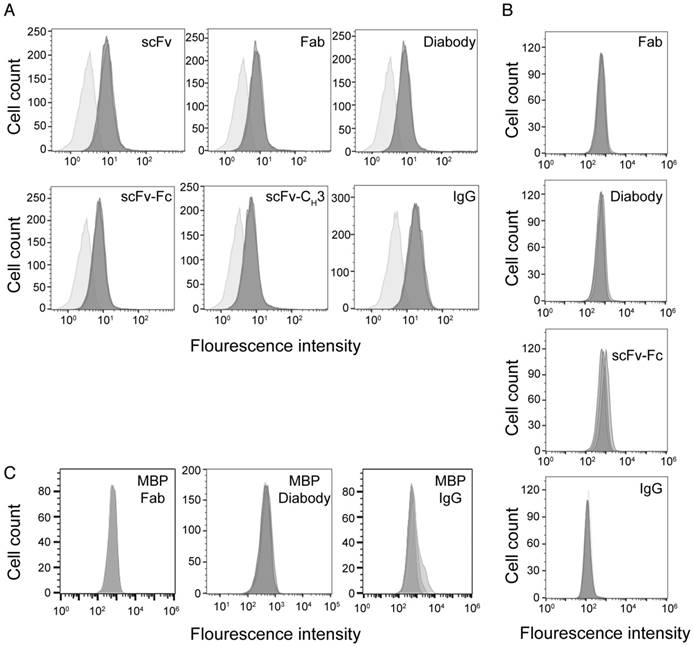 Evaluation of antibody fragment properties for near-infrared