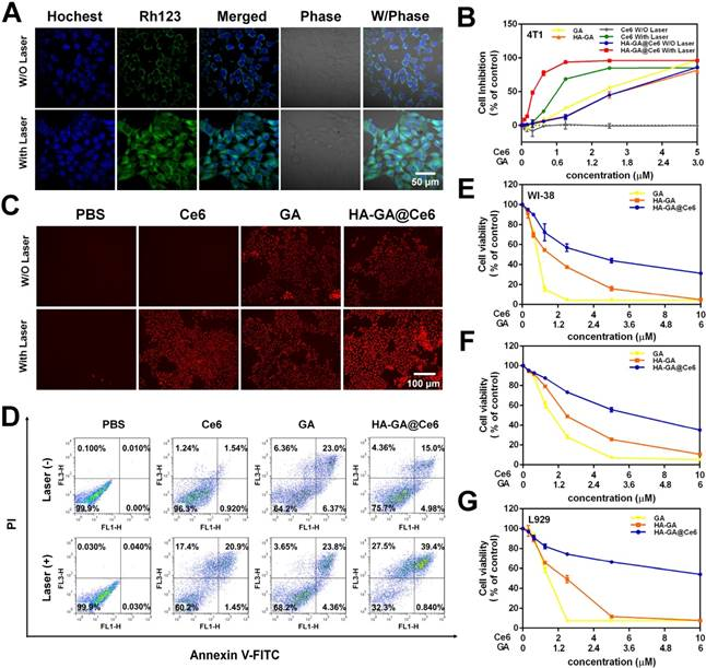 Tumor-specific activated photodynamic therapy with an