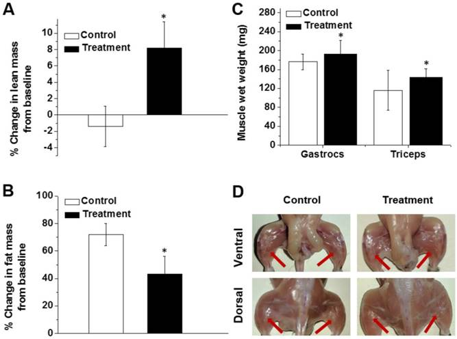 Increasing lean muscle mass in mice via nanoparticle