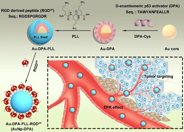 Awakening p53 in vivo by D-peptides-functionalized ultra