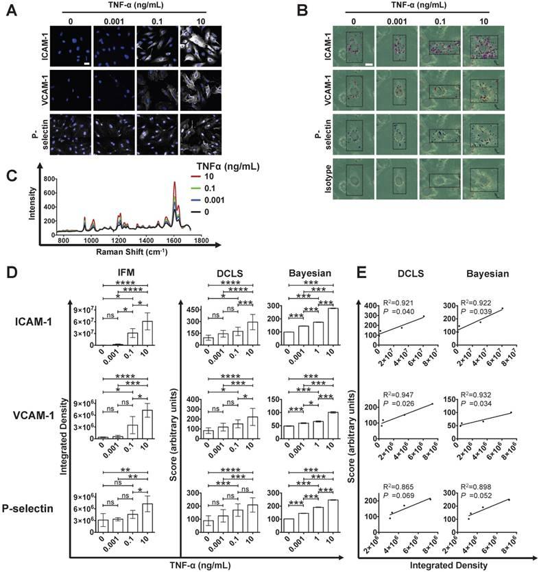 In vivo multiplex molecular imaging of vascular inflammation