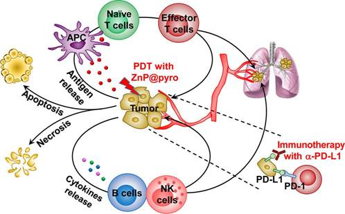 Engineering Nanoparticles for Targeted Remodeling of the Tumor