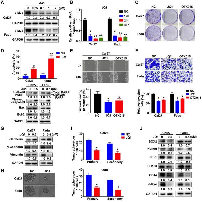 Therapeutic Targeting of BRD4 in Head Neck Squamous Cell