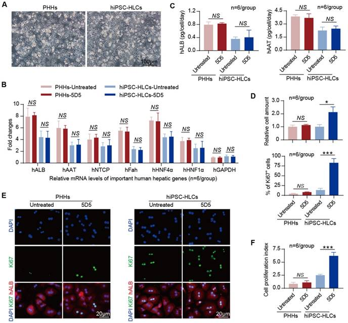 Agonist c-Met Monoclonal Antibody Augments the Proliferation