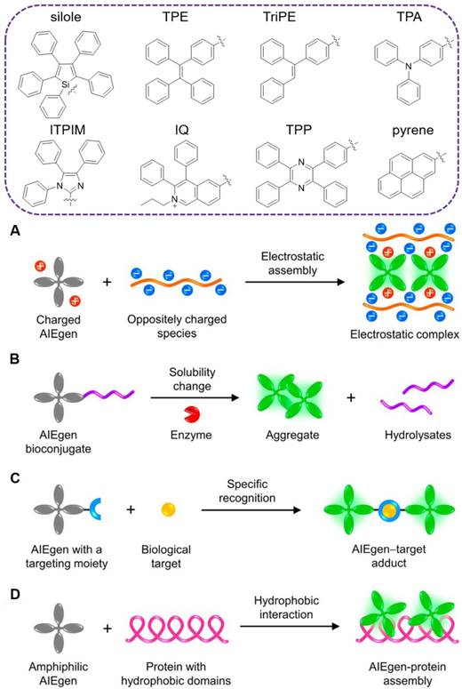 AIE-based theranostic systems for detection and killing of