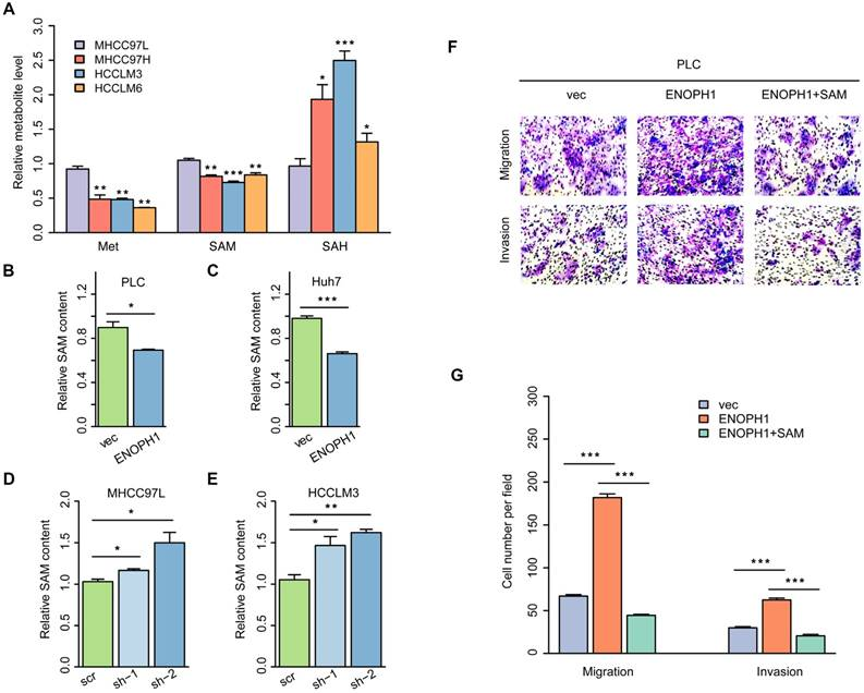 Integration of metabolomics and expression of enolase