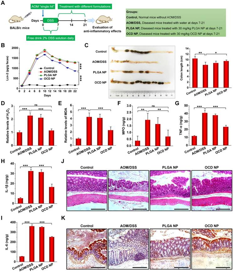 A Multifunctional Nanotherapy For Targeted Treatment Of Colon Cancer By Simultaneously Regulating Tumor Microenvironment