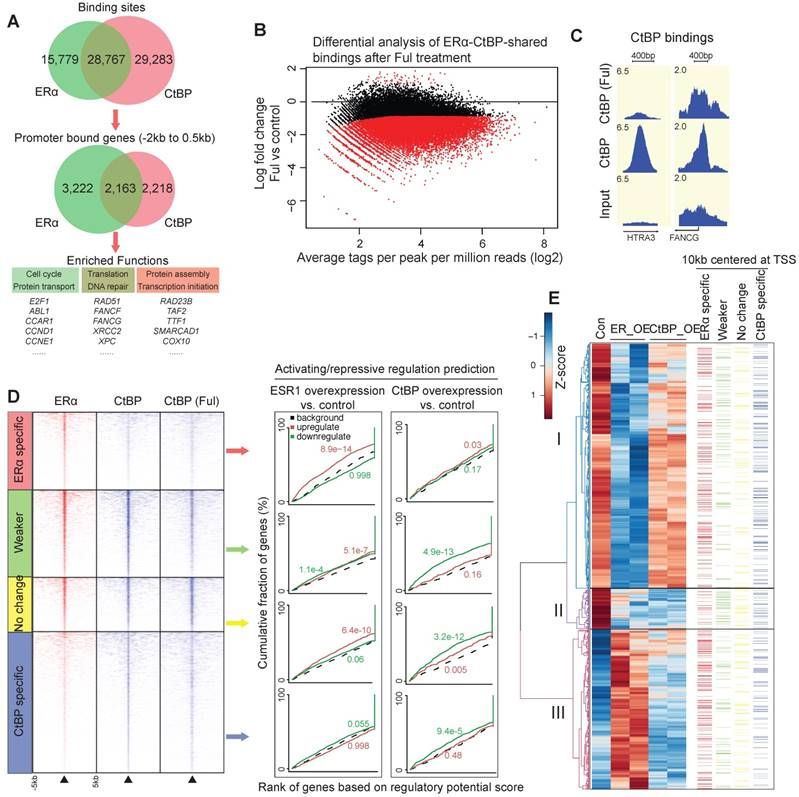 Non Classical Estrogen Signaling In Ovarian Cancer Improves Chemo Sensitivity And Patients Outcome
