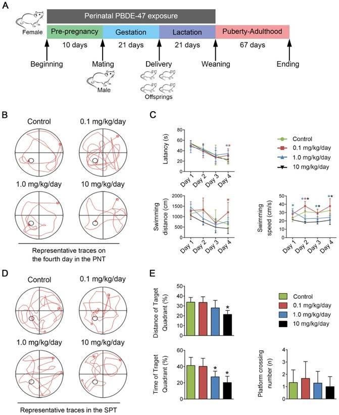 Autophagy impairment contributes to PBDE-47-induced developmental