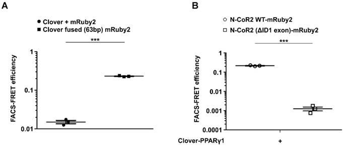 Flow cytometry-based FRET identifies binding intensities in PPARγ1