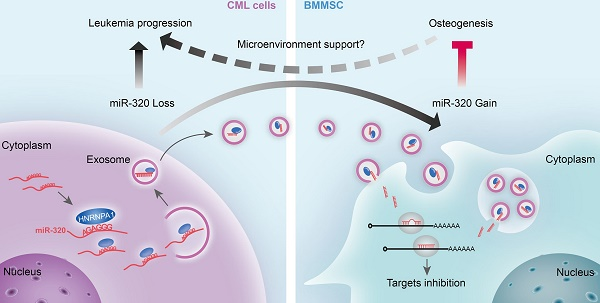 Cancer Cell Impact Factor Biox Anti Feixista
