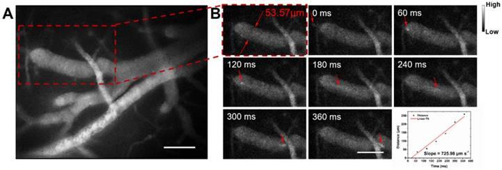 Excretable IR-820 for in vivo NIR-II fluorescence