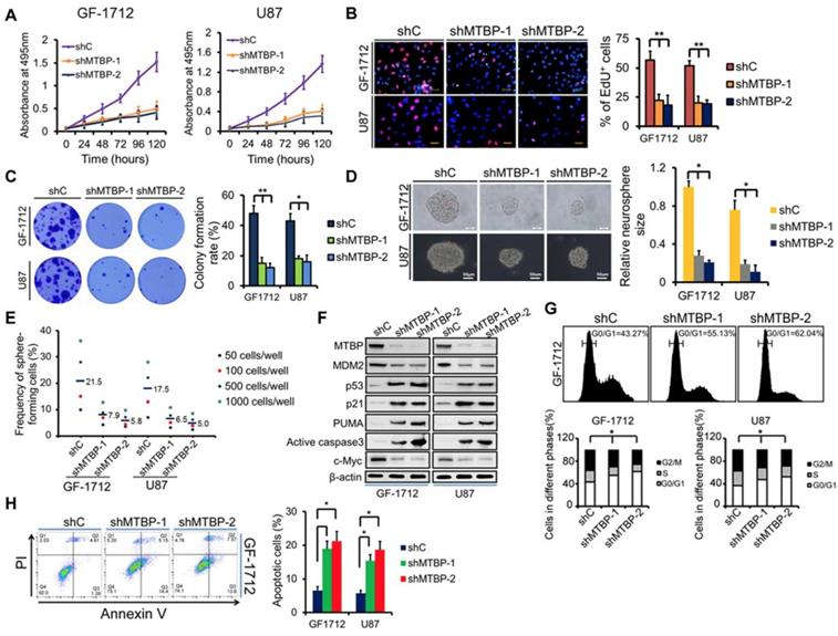 MTBP regulates cell survival and therapeutic sensitivity in