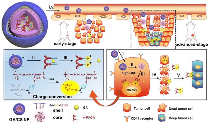 A stage-specific cancer chemotherapy strategy through