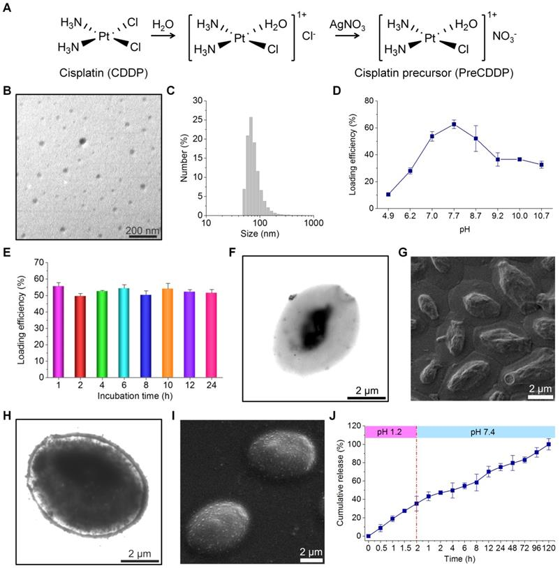 Targeted Delivery of Cisplatin-Derived Nanoprecursors via a
