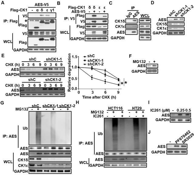 p53 regulates reprogramming and transformation through